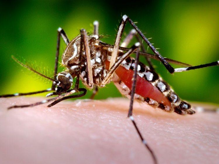 Image result for जाने डेंगू बुखार के लक्षणवबचाव के कुछ तरीके