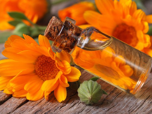 benefits of calendula oil in baby massage