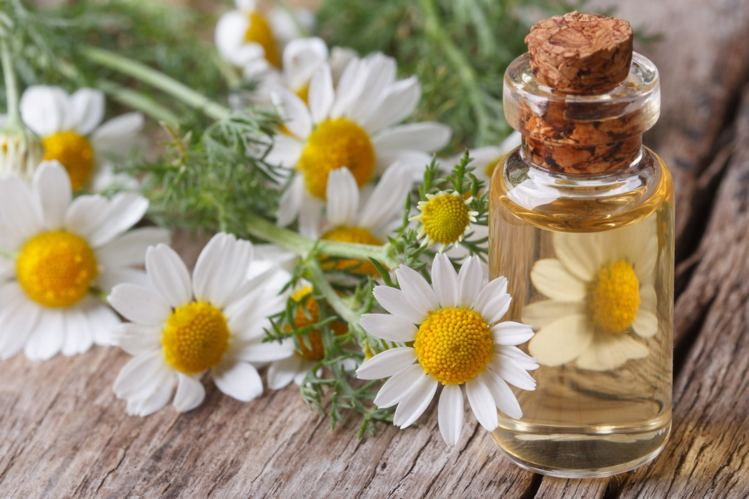 benefits of chamomile oil in baby massage